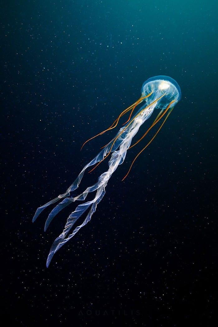 A beleza alienígena das criaturas subaquáticas em fotos de Alexander Semenov (40 fotos) 40