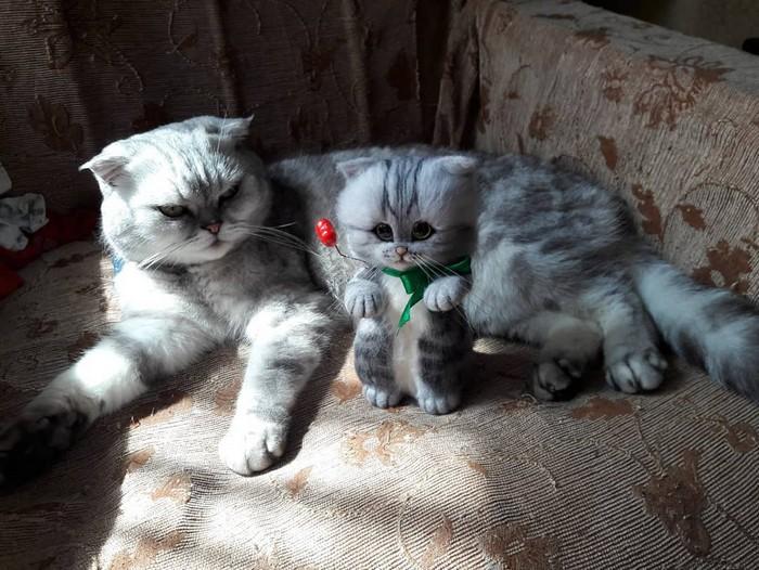 Artista russa cria gatinhos de feltro que parecem ter saído de um conto fada (32 fotos) 6