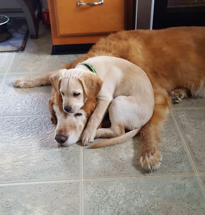 35 cães que tiveram suas vidas arruinadas depois que ganharam um Irmão mais novo 9