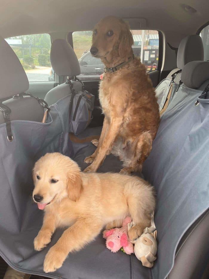 35 cães que tiveram suas vidas arruinadas depois que ganharam um Irmão mais novo 14