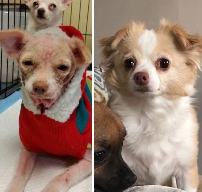 28 fotos de animais de estimação de resgate mais saudáveis do mês de maio 5