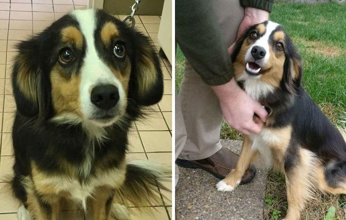 28 fotos de animais de estimação de resgate mais saudáveis do mês de maio 11