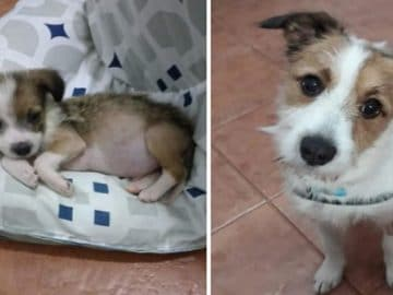28 fotos de animais de estimação de resgate mais saudáveis do mês de maio 26