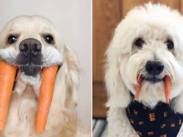 Nova raça de cachorro: O Cão vampiro (21 fotos) 6