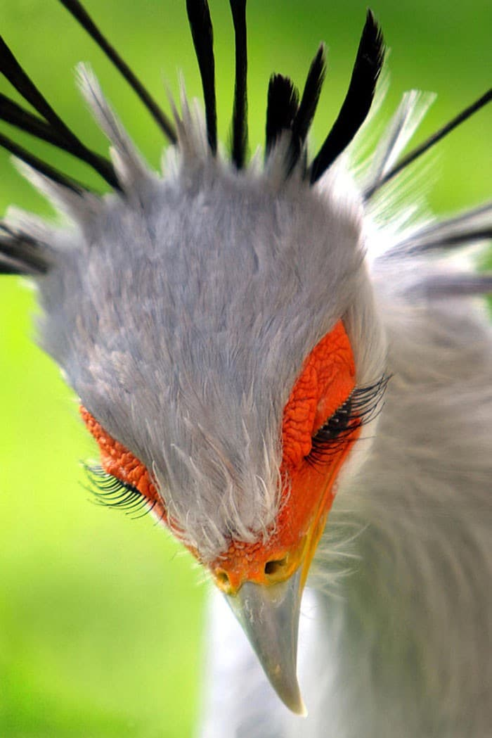 25 pássaros majestosos e únicos que surpreendem as pessoas com sua beleza 2