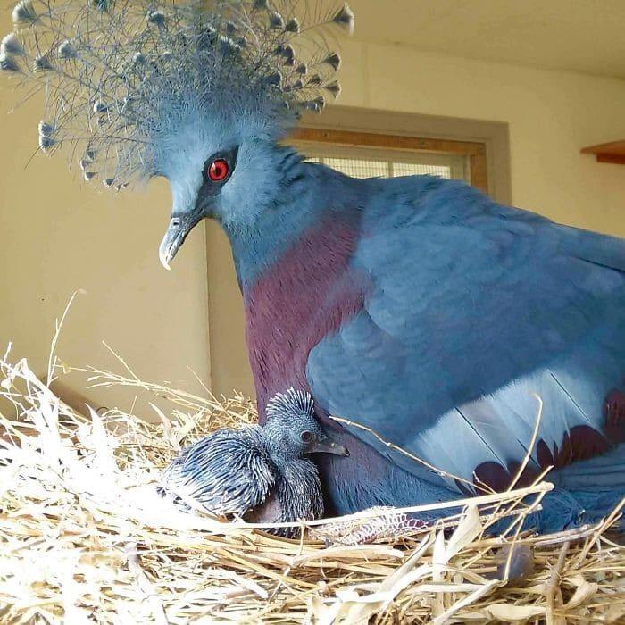 25 pássaros majestosos e únicos que surpreendem as pessoas com sua beleza 3