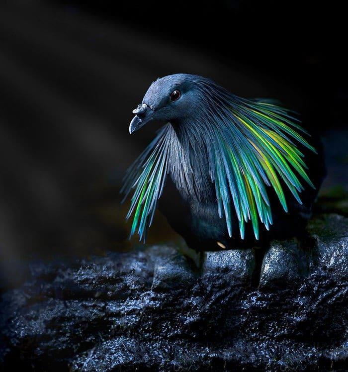 25 pássaros majestosos e únicos que surpreendem as pessoas com sua beleza 5