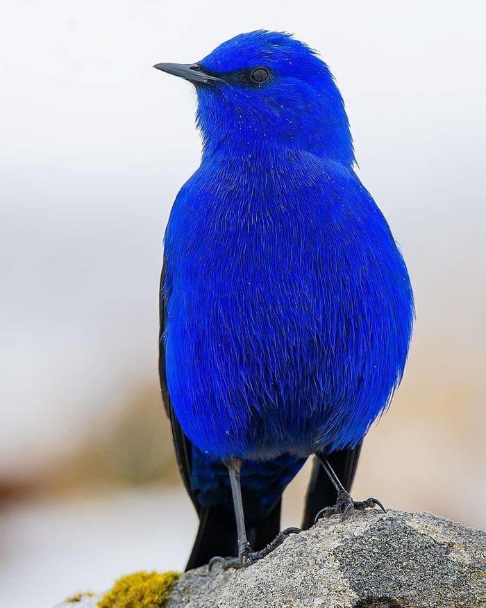 25 pássaros majestosos e únicos que surpreendem as pessoas com sua beleza 10