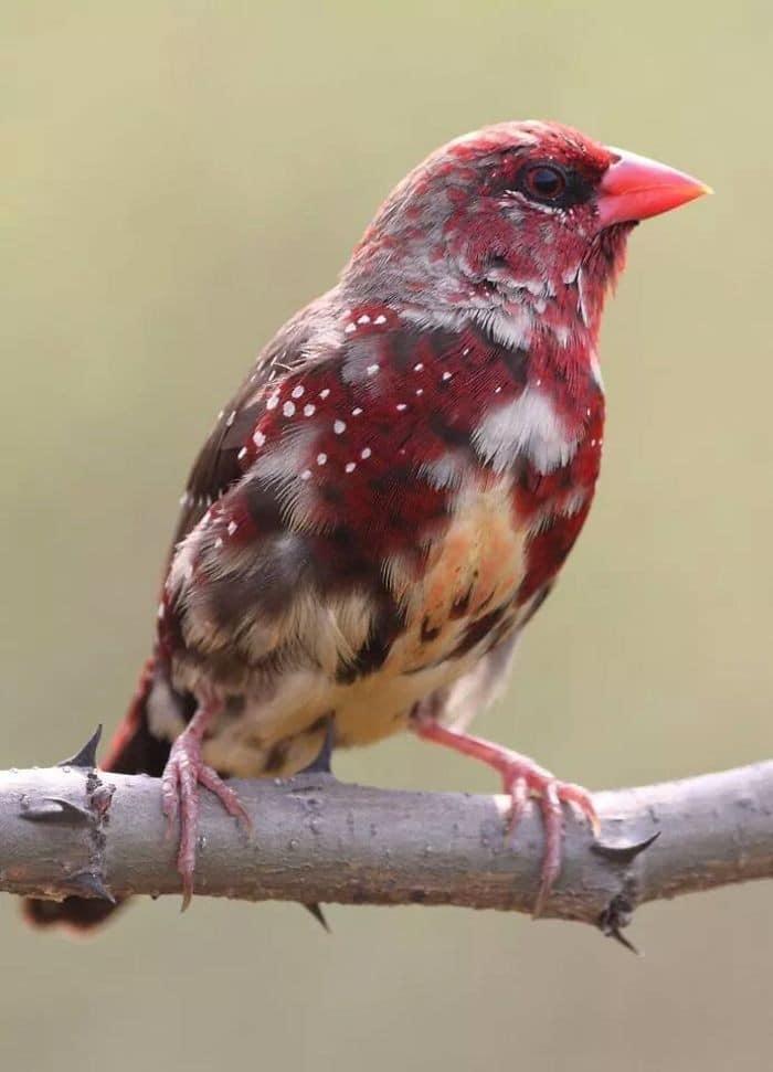 25 pássaros majestosos e únicos que surpreendem as pessoas com sua beleza 11