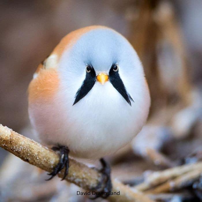 25 pássaros majestosos e únicos que surpreendem as pessoas com sua beleza 13