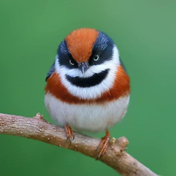 25 pássaros majestosos e únicos que surpreendem as pessoas com sua beleza 15