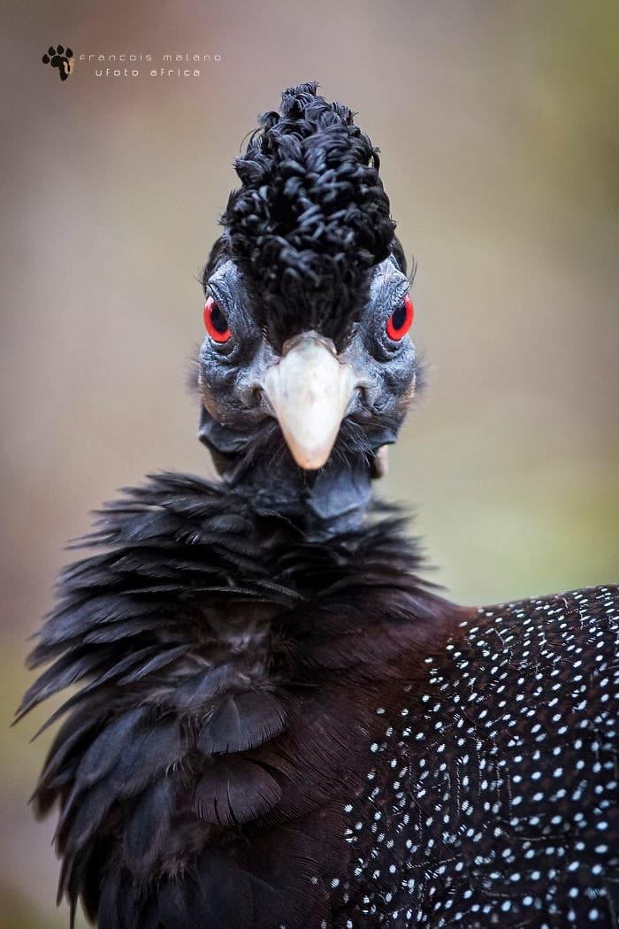 25 pássaros majestosos e únicos que surpreendem as pessoas com sua beleza 16