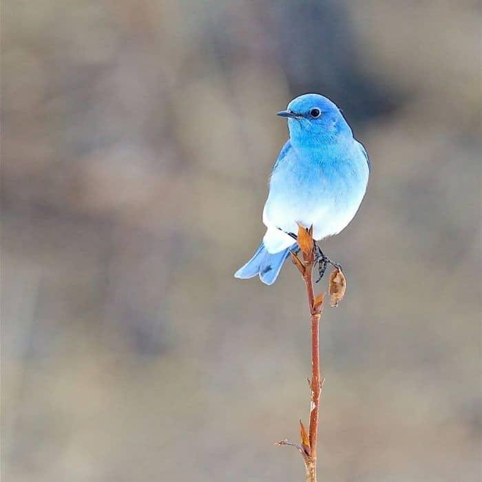 25 pássaros majestosos e únicos que surpreendem as pessoas com sua beleza 18