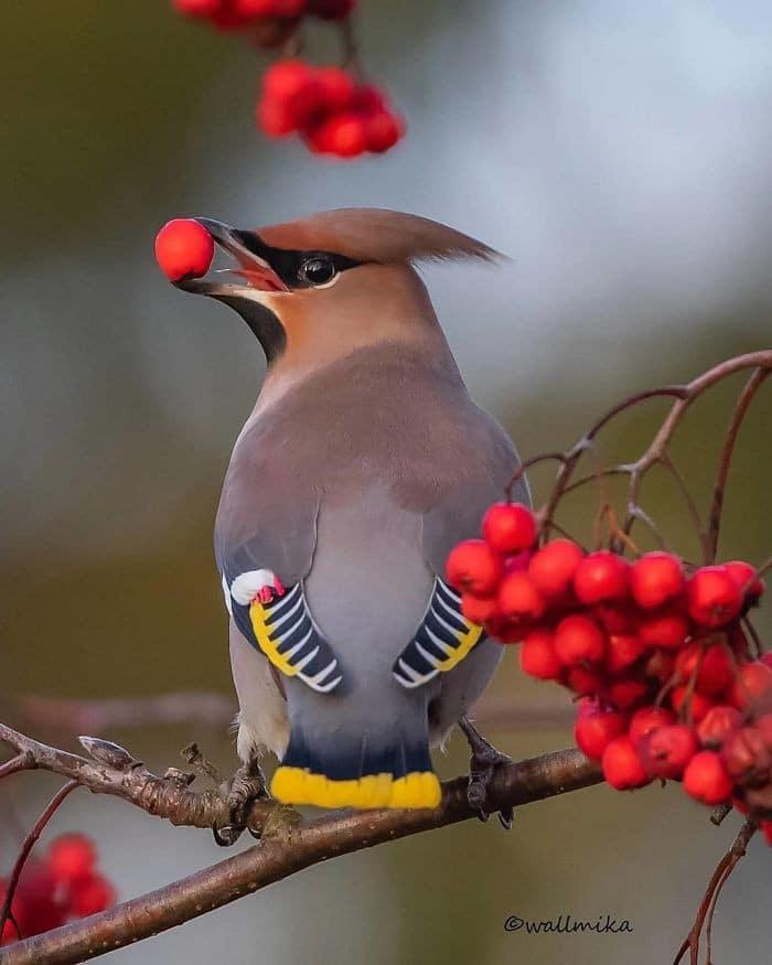 25 pássaros majestosos e únicos que surpreendem as pessoas com sua beleza 20