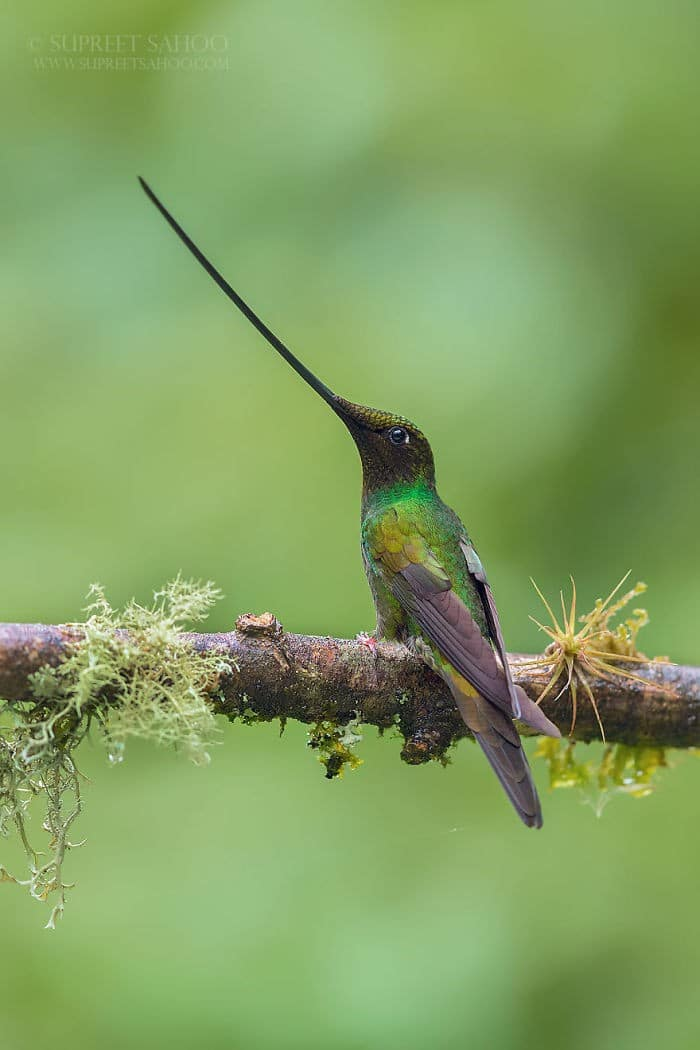 25 pássaros majestosos e únicos que surpreendem as pessoas com sua beleza 21