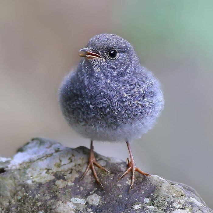 25 pássaros majestosos e únicos que surpreendem as pessoas com sua beleza 22