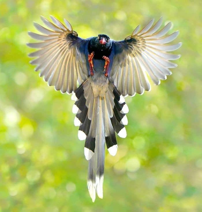 25 pássaros majestosos e únicos que surpreendem as pessoas com sua beleza 26