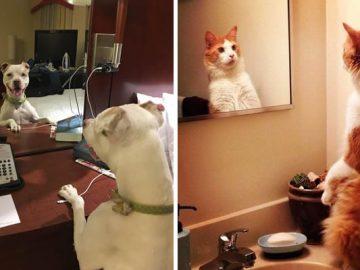 29 animais de estimação que descobriram espelhos 2