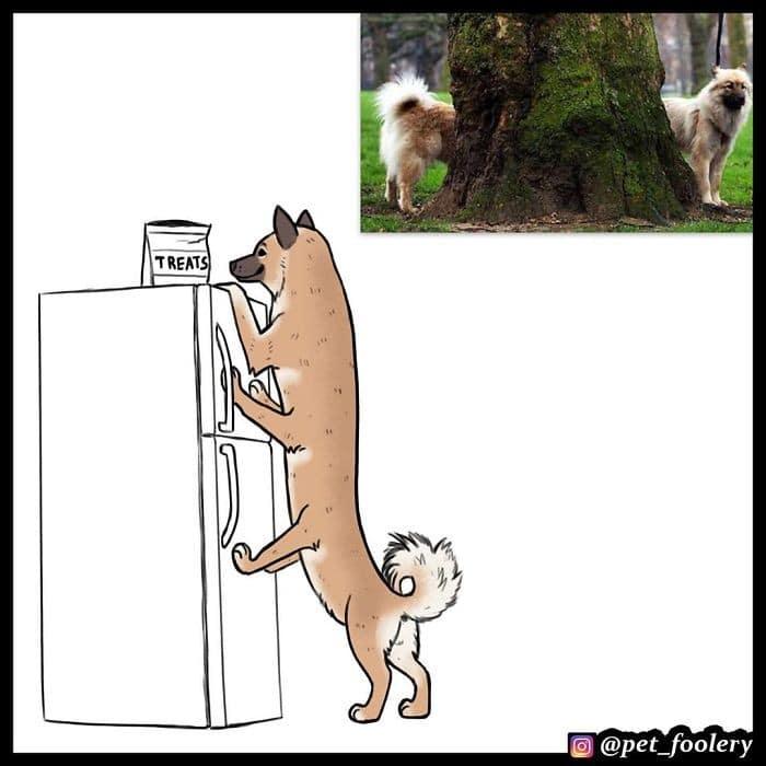 Autor reimagina os animais a partir de fotos engraçadas virais (6 fotos) 2