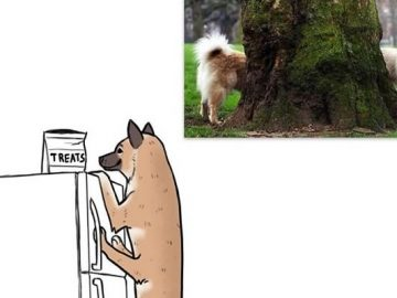 Autor reimagina os animais a partir de fotos engraçadas virais (6 fotos) 37