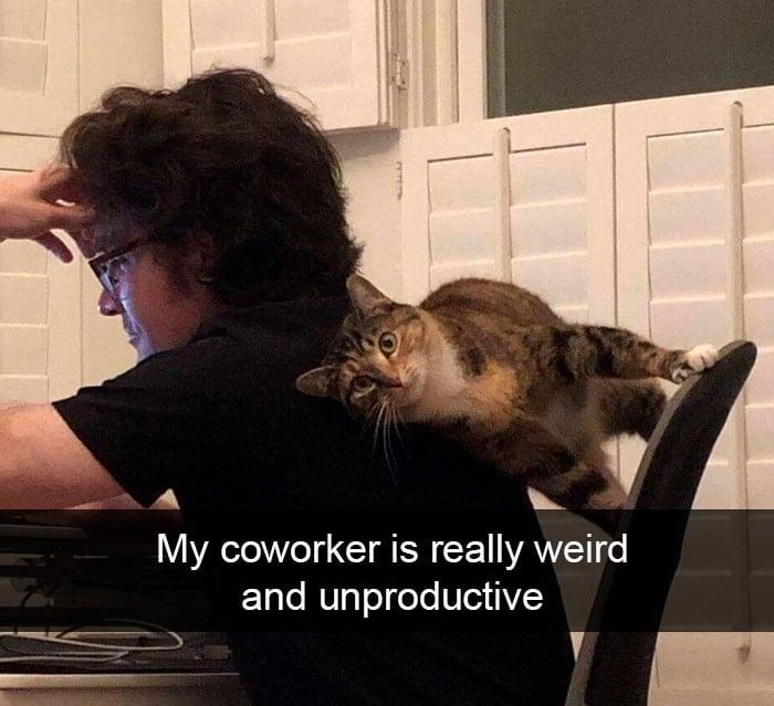 45 das postagens mais engraçadas sobre gatos que são impossíveis de não rir 2