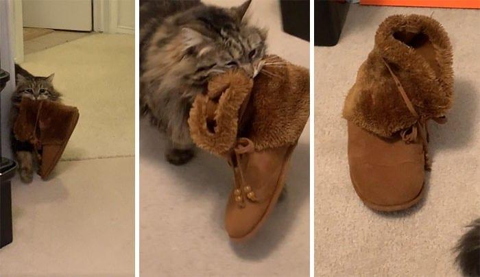 45 das postagens mais engraçadas sobre gatos que são impossíveis de não rir 7