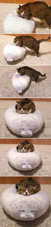 45 das postagens mais engraçadas sobre gatos que são impossíveis de não rir 8