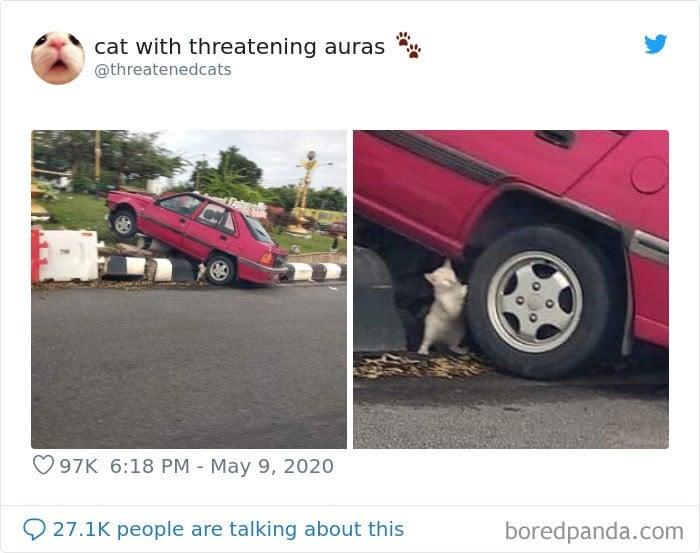 45 das postagens mais engraçadas sobre gatos que são impossíveis de não rir 9