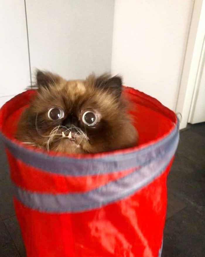 45 das postagens mais engraçadas sobre gatos que são impossíveis de não rir 10