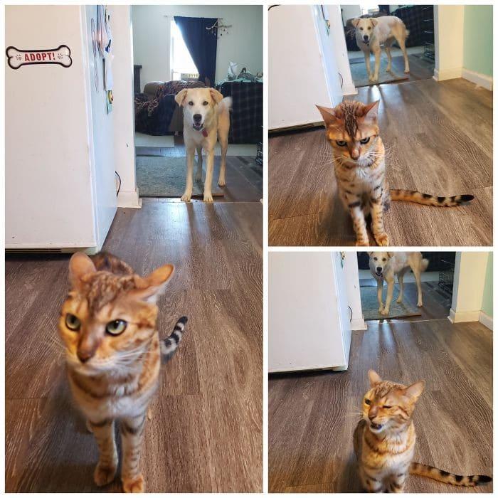 45 das postagens mais engraçadas sobre gatos que são impossíveis de não rir 11