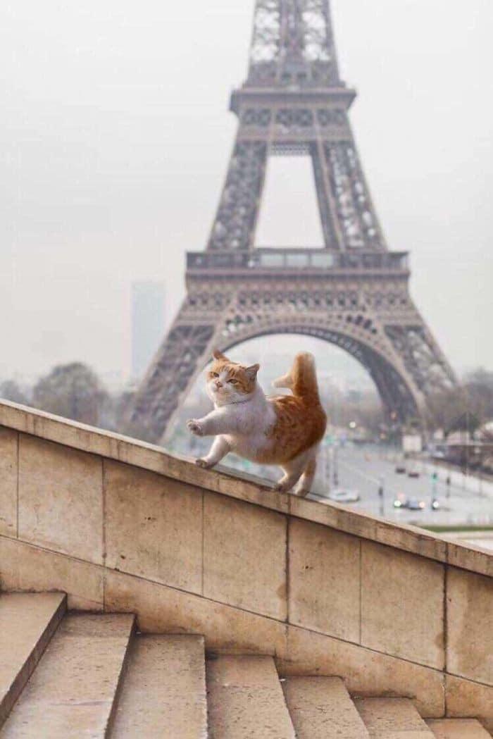 45 das postagens mais engraçadas sobre gatos que são impossíveis de não rir 15