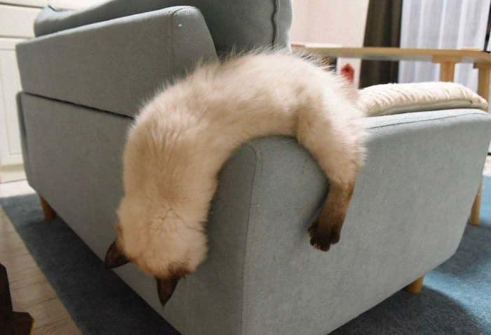 45 das postagens mais engraçadas sobre gatos que são impossíveis de não rir 21