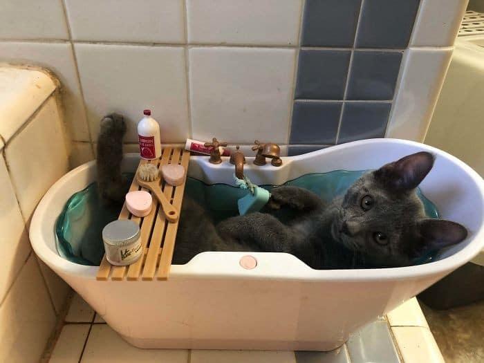 45 das postagens mais engraçadas sobre gatos que são impossíveis de não rir 31