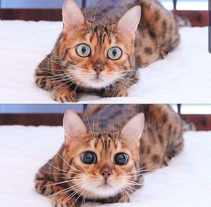 45 das postagens mais engraçadas sobre gatos que são impossíveis de não rir 32
