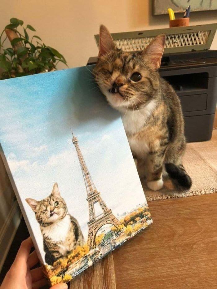 45 das postagens mais engraçadas sobre gatos que são impossíveis de não rir 33