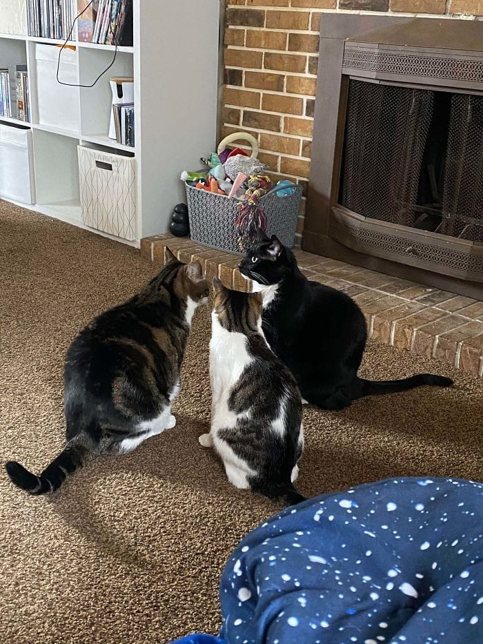 45 das postagens mais engraçadas sobre gatos que são impossíveis de não rir 36