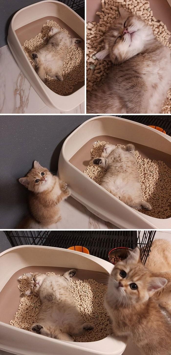 45 das postagens mais engraçadas sobre gatos que são impossíveis de não rir 37