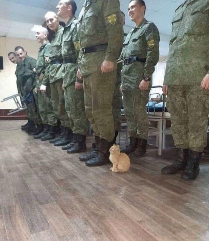 45 das postagens mais engraçadas sobre gatos que são impossíveis de não rir 39