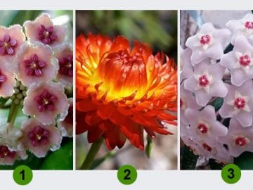 Escolha uma flor e receba um conselho para sua semana 4