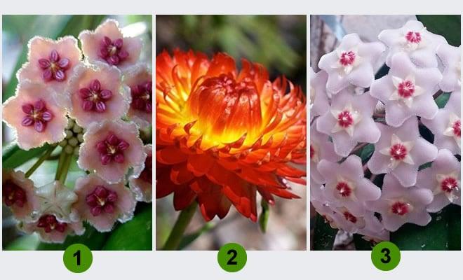 Escolha uma flor e receba um conselho para sua semana 2