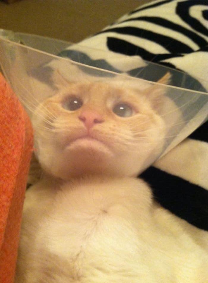 35 fotos engraçadas de animais de estimação usando cone 9