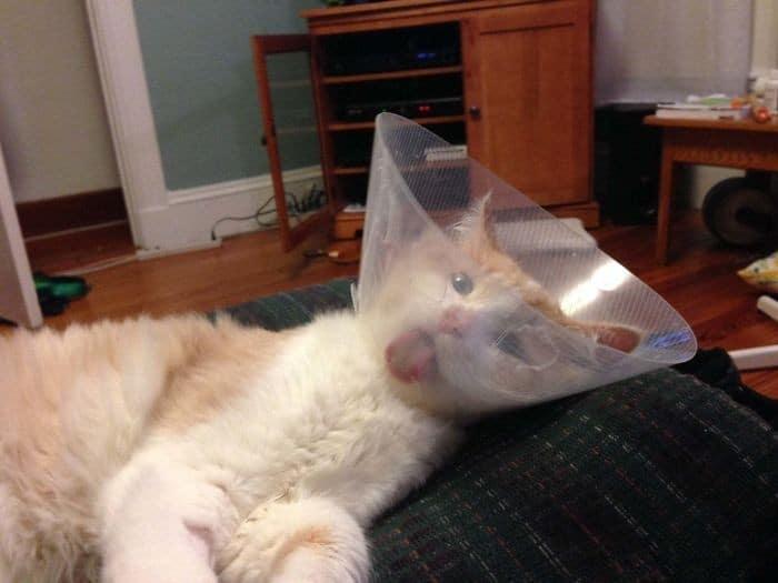 35 fotos engraçadas de animais de estimação usando cone 11