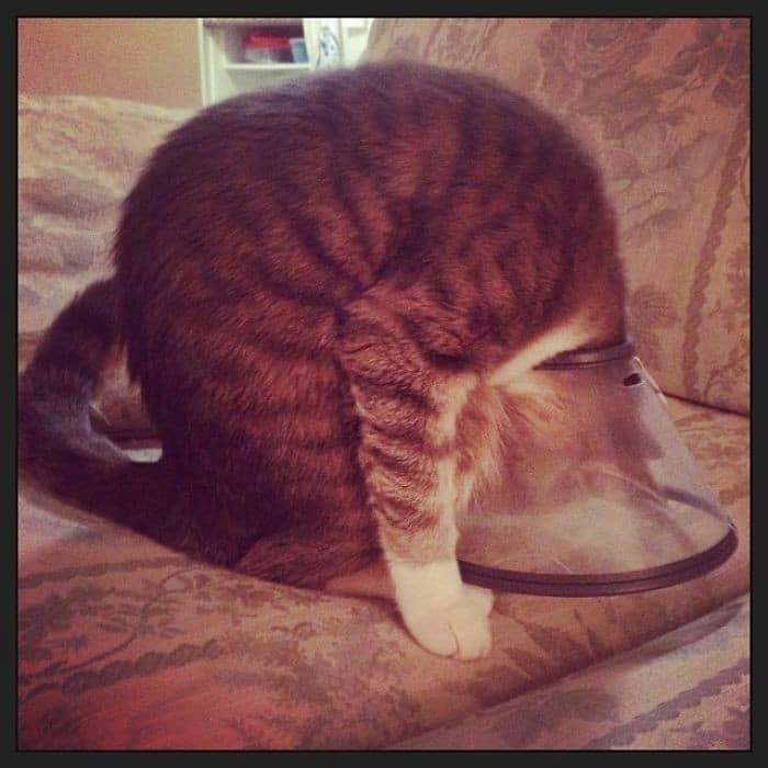 35 fotos engraçadas de animais de estimação usando cone 12