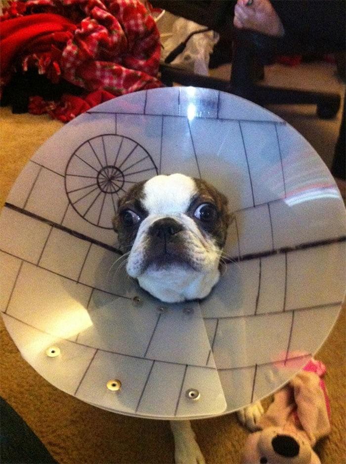 35 fotos engraçadas de animais de estimação usando cone 16