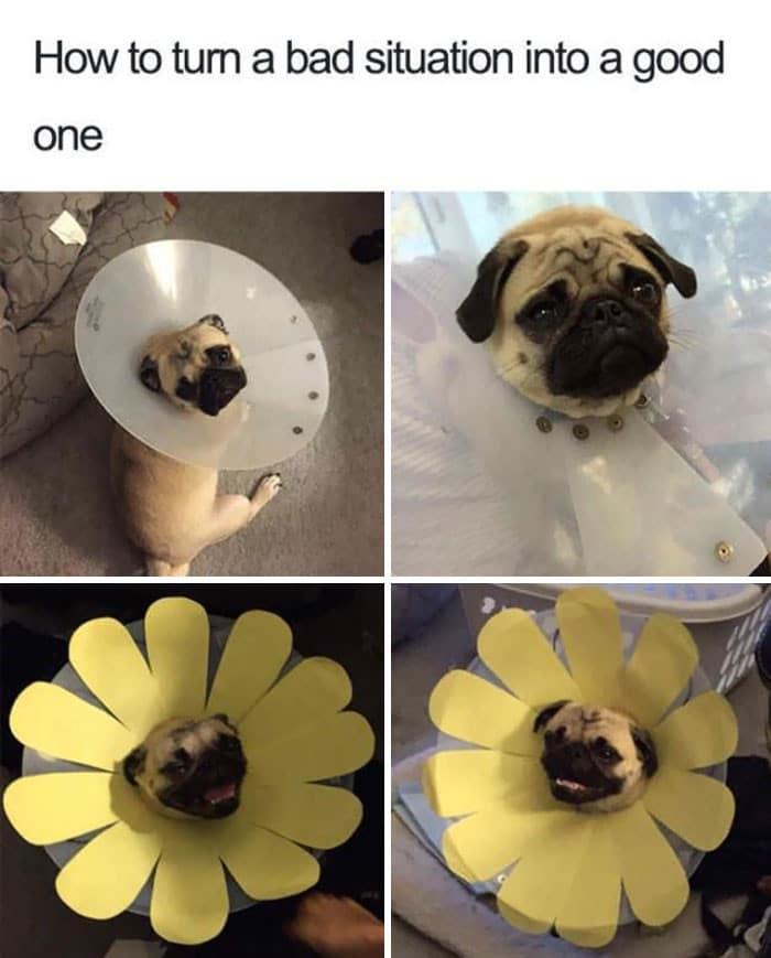 35 fotos engraçadas de animais de estimação usando cone 24