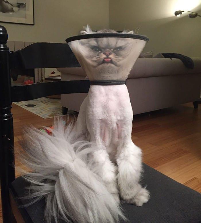35 fotos engraçadas de animais de estimação usando cone 30
