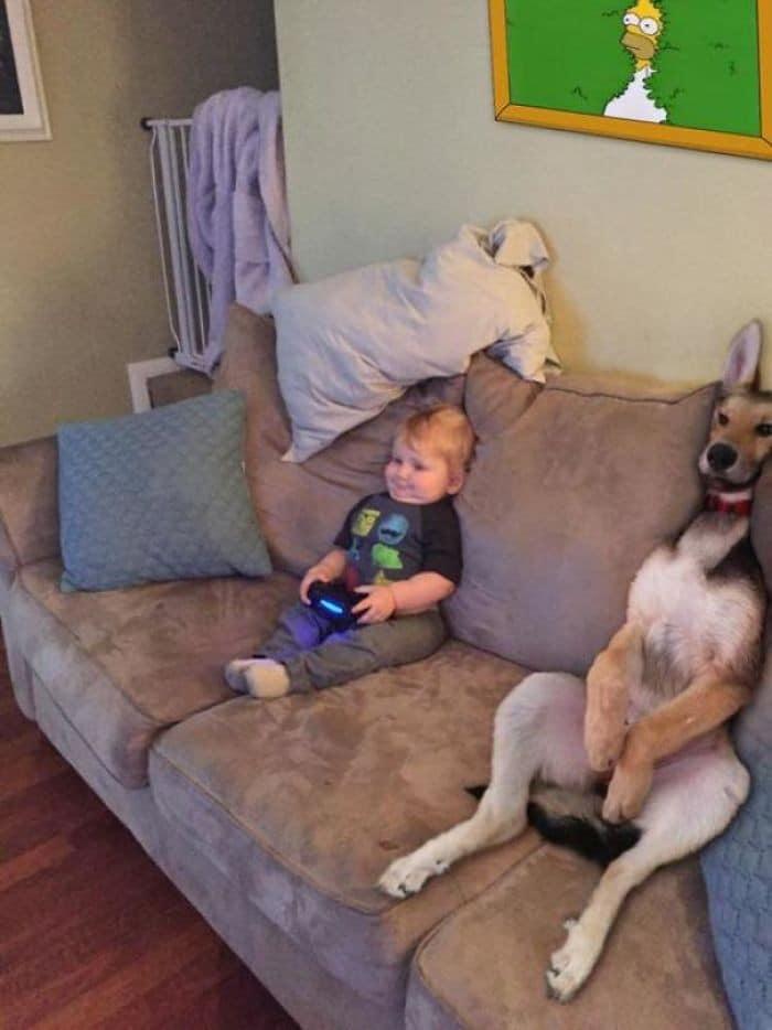 35 fotos hilárias de cachorro para colocar um sorriso em seu rosto 26