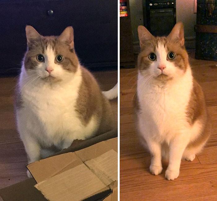 37 impressionantes transformações de perda de peso de gato 5