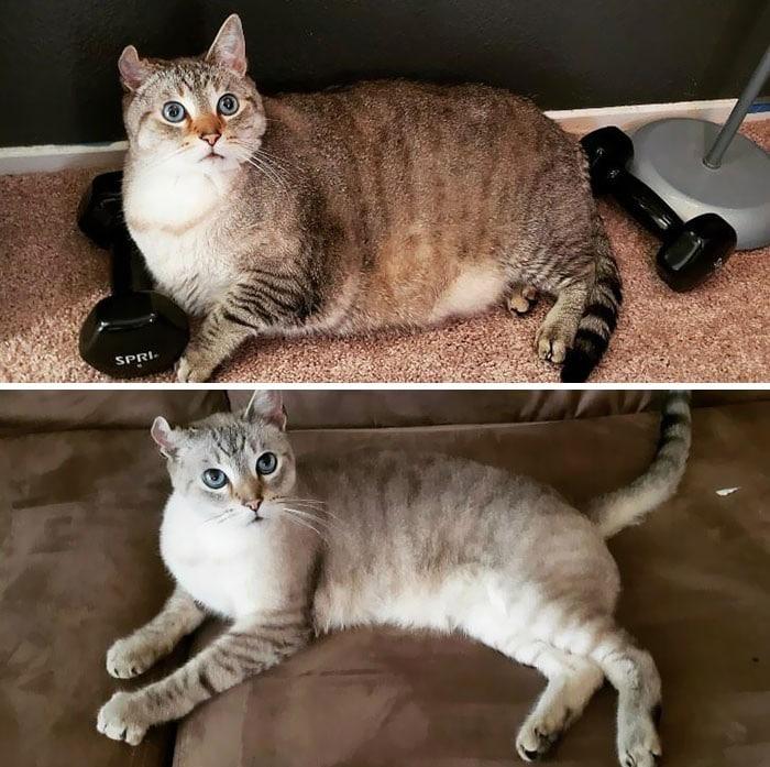 37 impressionantes transformações de perda de peso de gato 20