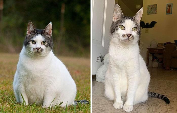 37 impressionantes transformações de perda de peso de gato 21
